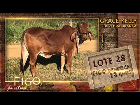 LOTE 28 - GRACE KELLY FIV PEDRA BRANCA - APIG 100