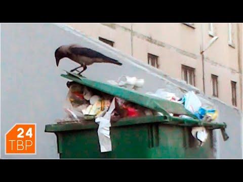 Проблема мусора решается, но ещё не решена | Новости | Сергиево-Посадский городской округ
