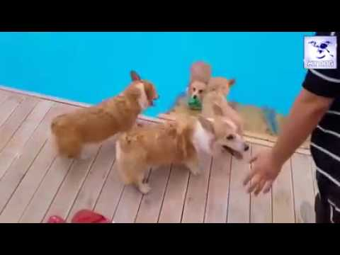 Funny Dogs And Funny Cats Videos   Funny Animals Videos   Cutest