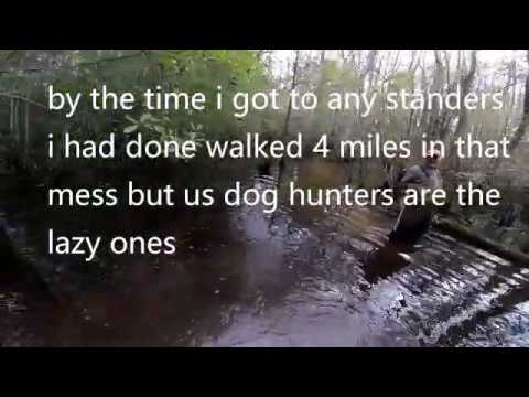 Deer Dog Drive 11/10/2018 Hunting The Big Swamp I Lost My Shoes Mp3