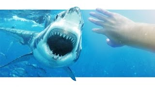 Add a Shark to your Video!
