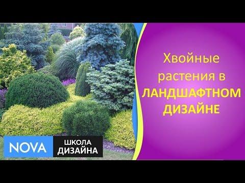✽ Хвойные растения в ЛАНДШАФТНОМ дизайне ✽ Ландшафтный дизайн участка✽ Школа дизайна - #NOVA