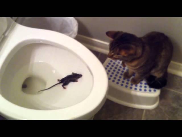 Кошки как ловить мышей видео