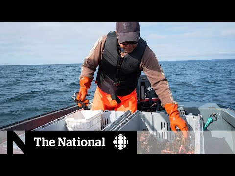 CBC News: The National: Another Nova Scotia First Nation plans to launch its own lobster fishery