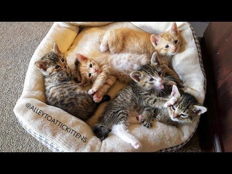 Clara's BTTF Kittens - Kitten Cam Live Stream (Alley to Attic)