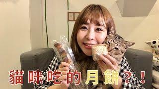 貓咪也有月餅?!第一次和臭老斑一起過中秋 ft.不麻煩鮮作寵食 | 英國捲毛貓Nina
