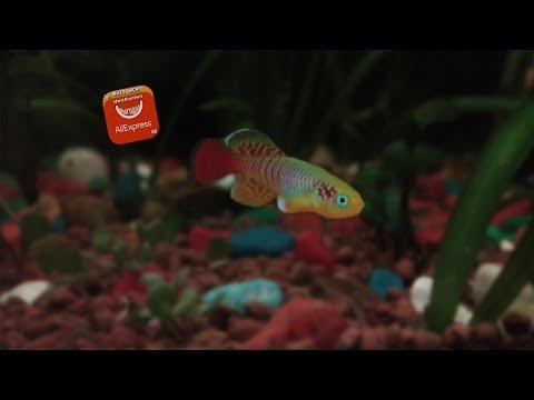 Живые аквариумные рыбки с Aliexpress