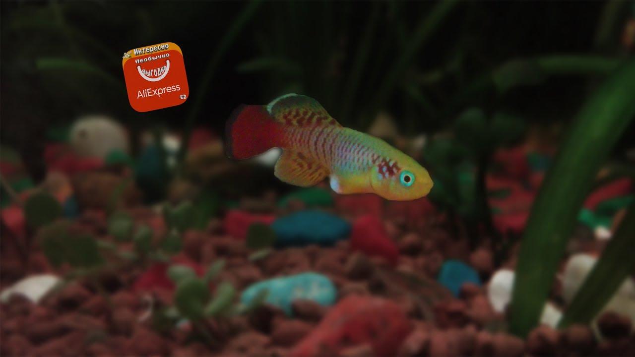 Аквариумные рыбки! Как узнать нужное количество рыбок для .