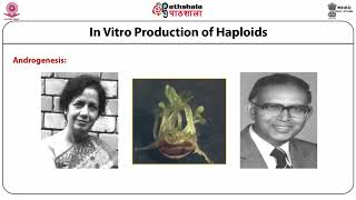 In Vitro Production of Haploids-Part 1 (Anther Culture)