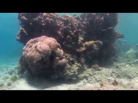 Video Sample of Fantasea BigEye Effect Underwater with Canon G7X
