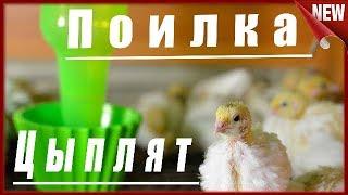 ⚠ Поилка для суточных цыплят и перепелят ⚠Как сделать ваккумные  поилки для брудера своими руками.
