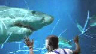 WORLDS BIGGEST !!GREAT WHITE SHARK