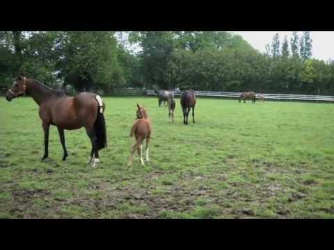 Bac pro CGEA élevage