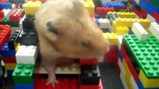hamster in big lego maze