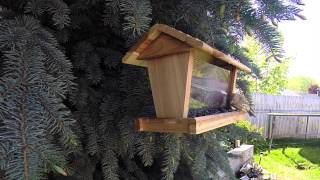 What The Bird Feeder Should Look Like.