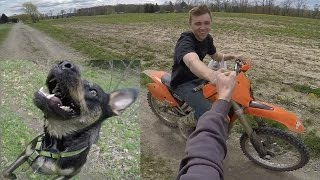 DIRT BIKES & DOGS are AWESOME