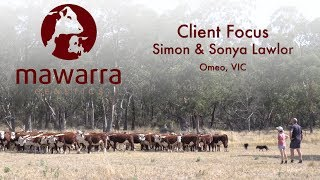 Mawarra Genetics Client Focus - Simon Lawlor