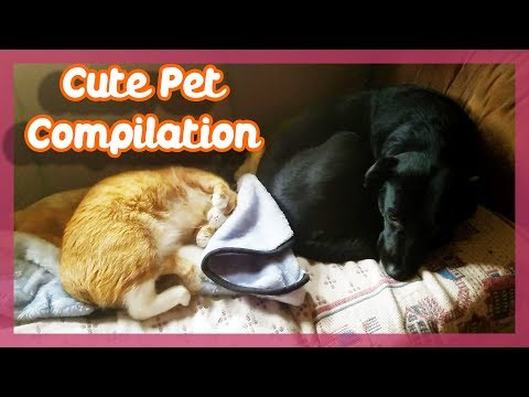 Cat and Dog Sleep By Each Other - Pet Compilation (Supporter Club Video #2 )