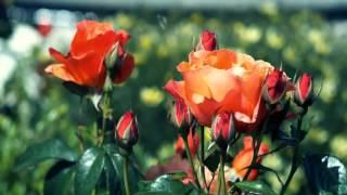 02 Урок 4 Забота Бога о жизни человека на земле