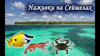 Ловим наживки на Сейшелах. Русская Рыбалка 3.99.
