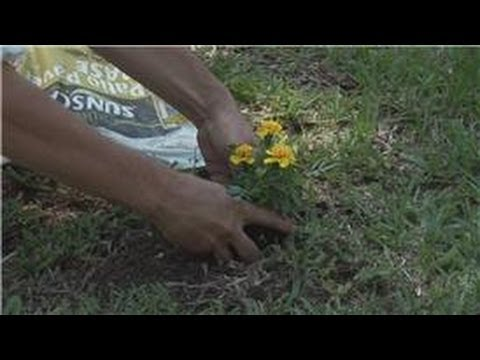 Beginners' Gardening Tips : Plants for a Meditation Garden