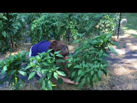 4-H Garden Series: Episode 2