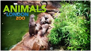 Animals of ZSL London Zoo HD 1080p