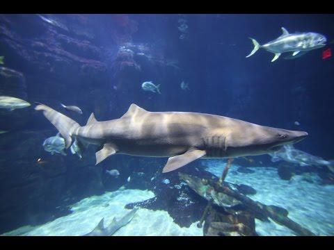 Shark Tank At Virginia Aquarium In Va Beach