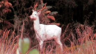 21 Mostly Albino Creatures Explained
