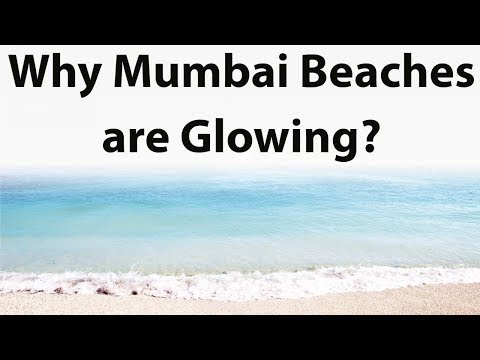 Why Mumbai beaches are glowing ? Is it global warming , where have these nocturnal algae come from?