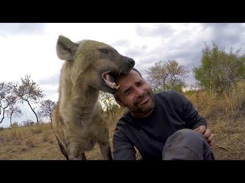 Hermaphrodite Spotted Hyenas? | The Lion Whisperer