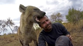 Are Hyenas Hermaphrodites? | The Lion Whisperer