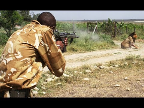 Ботсвана. Львы зашли в деревню!!! Африка, дикая природа. Сафари. Кругосветка не круиз - Ржачные видео приколы