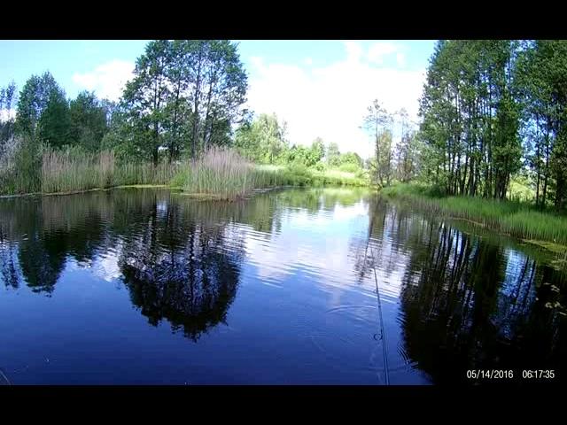 Заболоченное озеро 5