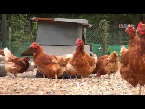 Dinesh in Thedal   Ep 4   Chicken Farm Part 2   IBC Tamil TV