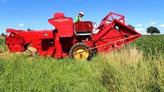 Massey Ferguson 30-6 bei der Weizenernte in Fürstenfeld