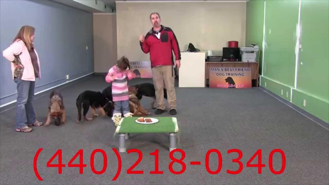 15 Week Old Trained German Shepherd Puppies for Sale
