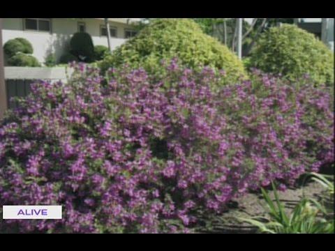 Nature - Plante Pour Bordure - 25/10/2016