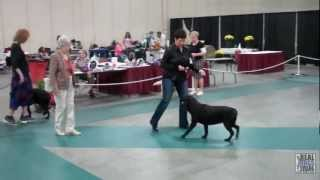 2012 Ukc American Hairless National Specialty