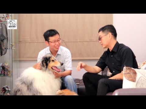 Mengenal Anjing Collie (Lassie) Yang Cantik & Pintar