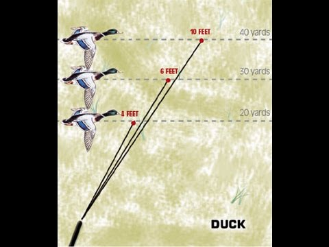 How to Lead Birds Shooting 101 Game Birds