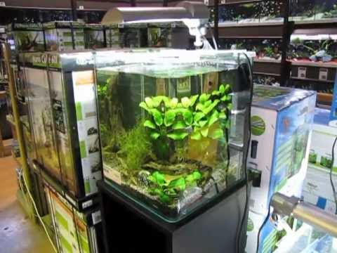 Acheter un nano aquarium mon comparatif youtube for Aquarium a acheter