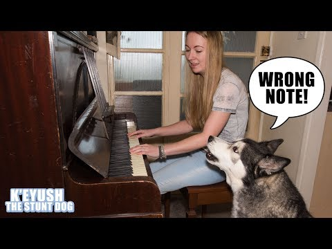My Husky Critiques My Piano Playing!
