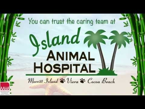Caring for Senior Pets - Tips from Island Animal Hospital Vets