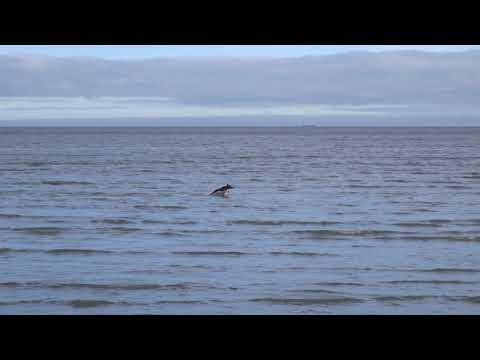 Sony HX50 | 30X Optical Zoom Test - Part 2 | Dublin Sandymount Strand