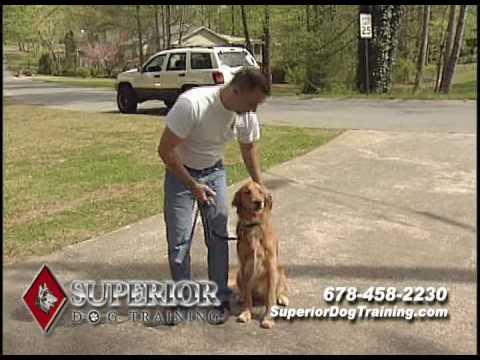 superior-dog-trainers-in-georgia