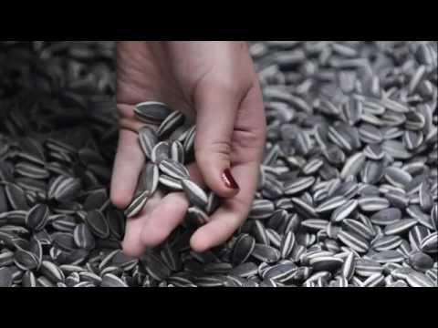 Тыквенные семечки – польза и вред, лечение тыквенными