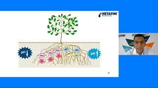 Curso en línea - Soluciones Netafim Para Berries