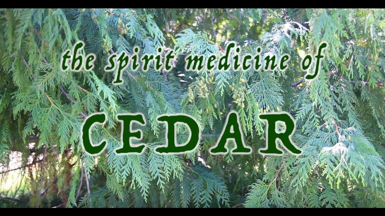 Download The Spirit Medicine of Cedar