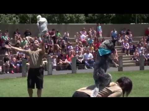 Stunt Dog Adventure TM ( the Zoo and Wildlife Park dog show)